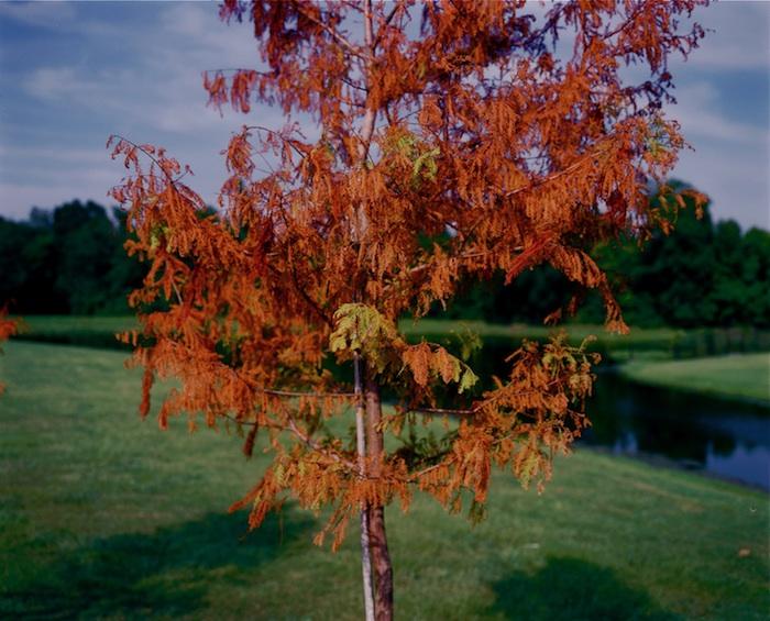 Summer Foliage, BRLA 2008