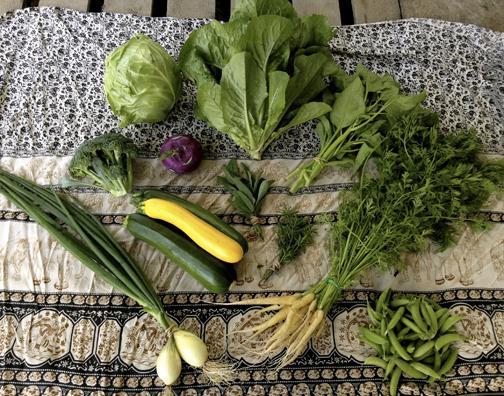 Nolan Calisch in collaboration with Sonya Montenegro - Calypso Farm (Fairbanks, AK) Calypso Farm and Ecology Center 1, 2013
