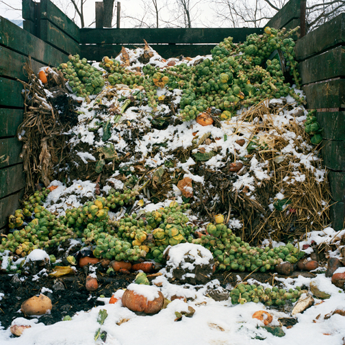 Christin Boggs (Washington DC)  Brussel Sprouts, Blue Heron Farm, 2010  From the series Slow and Steady