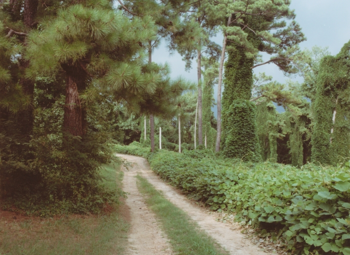 Delta Bluff Road