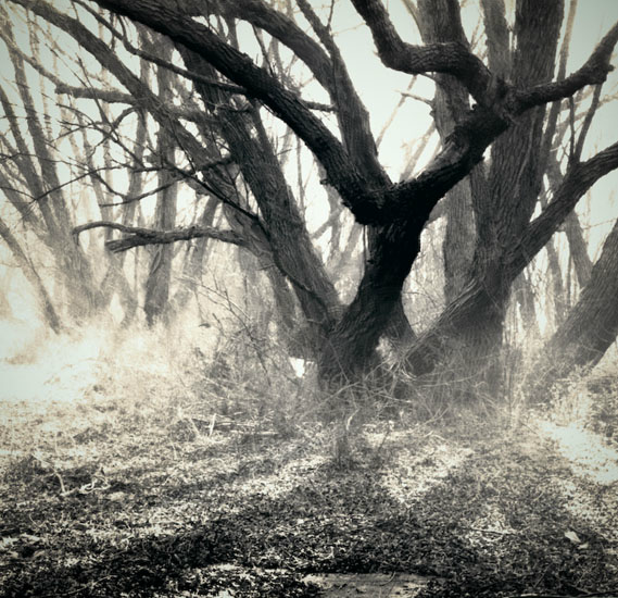 Primordial Mist  by Victoria Ryan