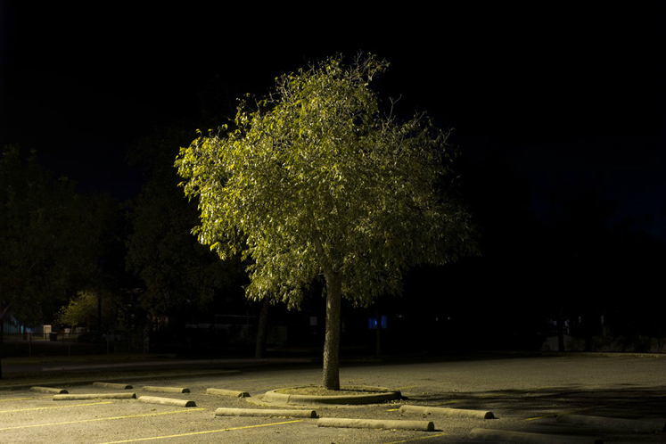 Trees  by Andy Mattern