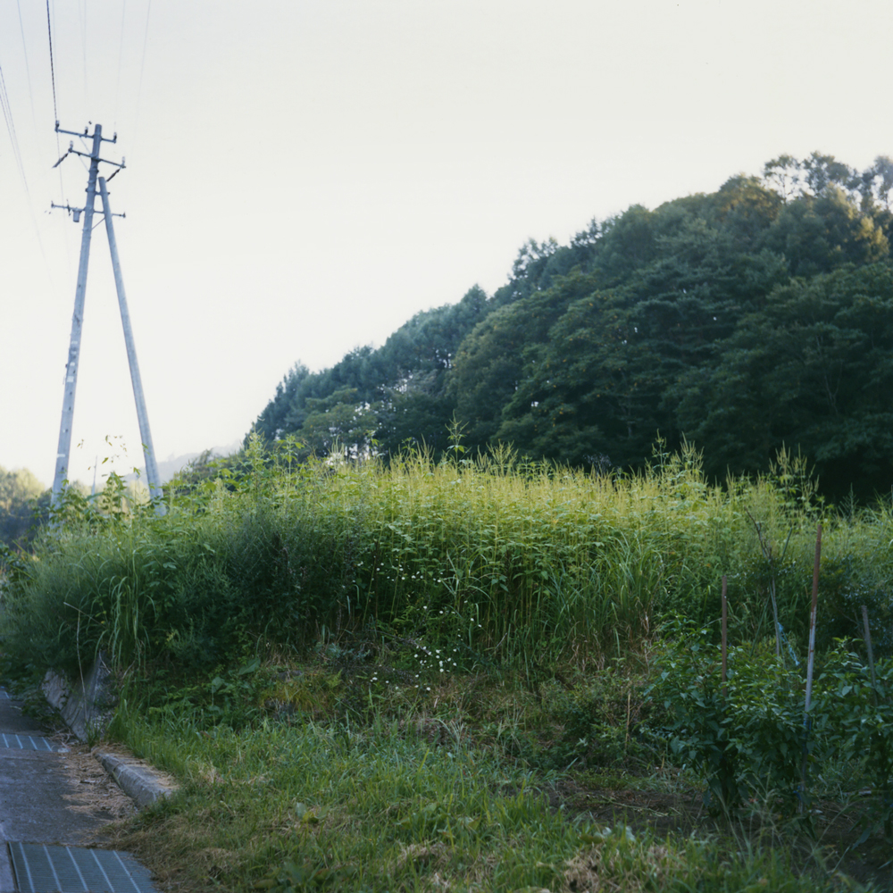 """Toumorokoshi-batake (a corn field)"":  I walk up the hill to harvest corn for the night."