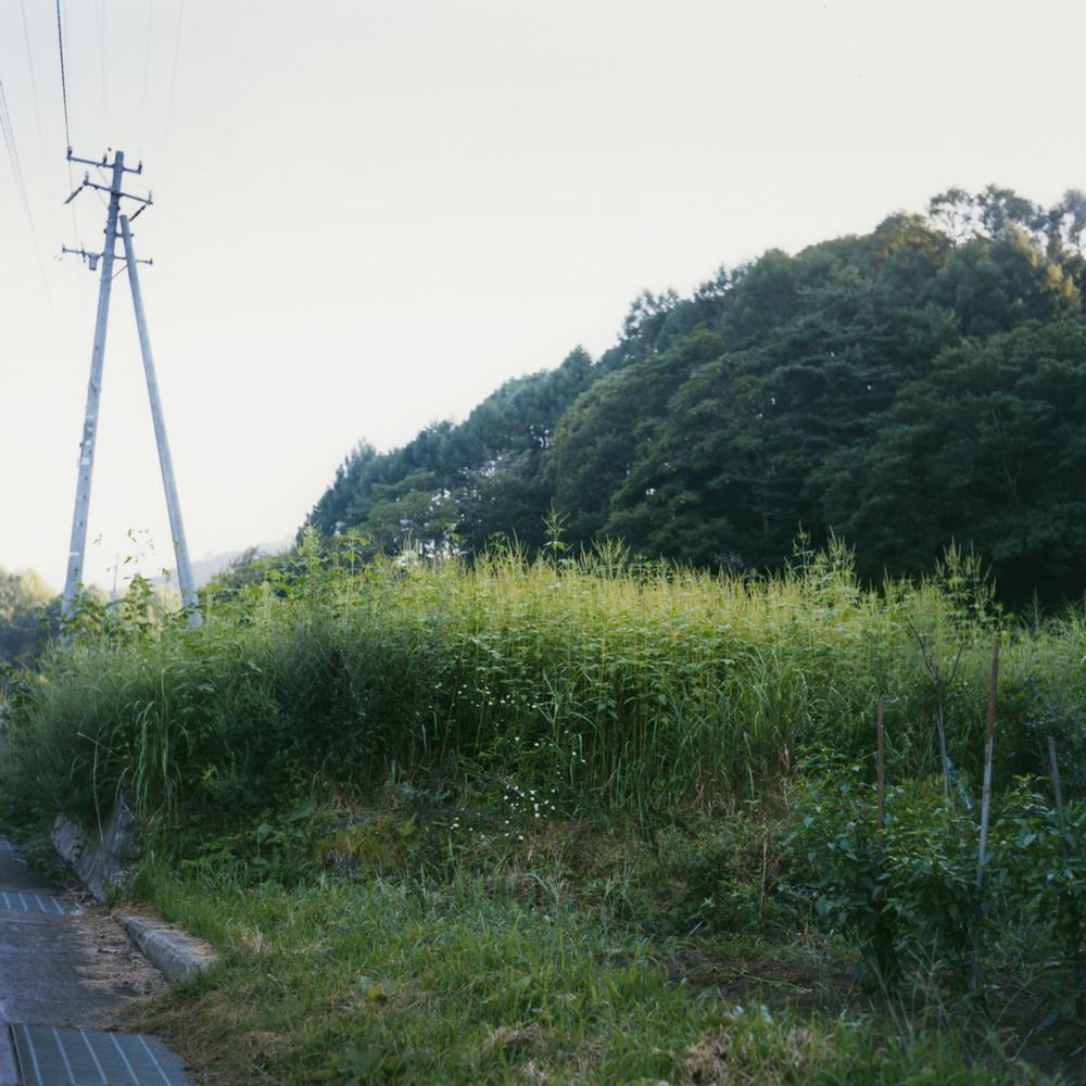 """Toumorokoshi-batake (a corn field)"": I walk up the hill to harvest corn for the night."