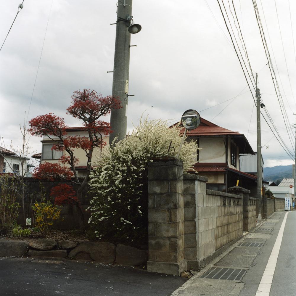"""Yuki-yanagi (baby's breath spirea)"" : Spireas always bloomed around the house, I visited in my childhood."