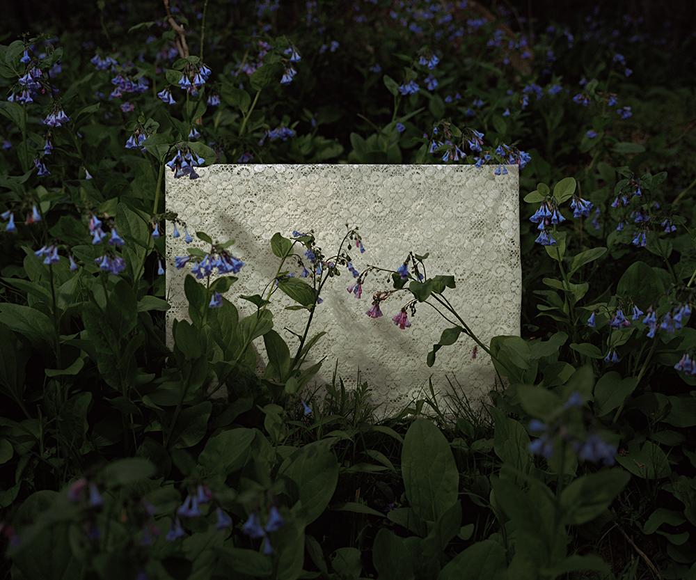 bluebell1.jpg