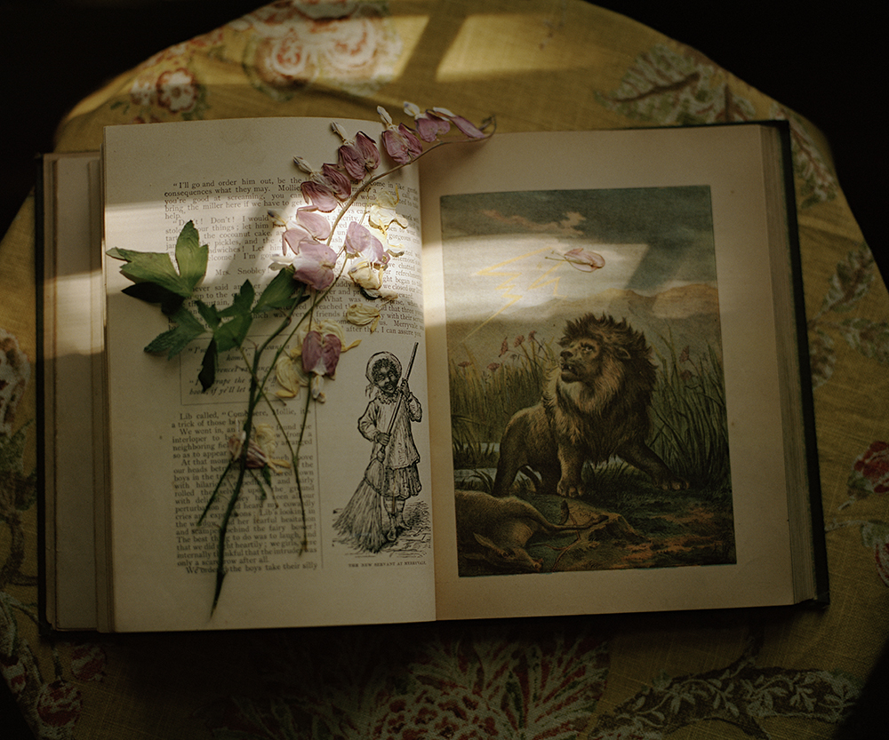 lion book pressed flower.jpg