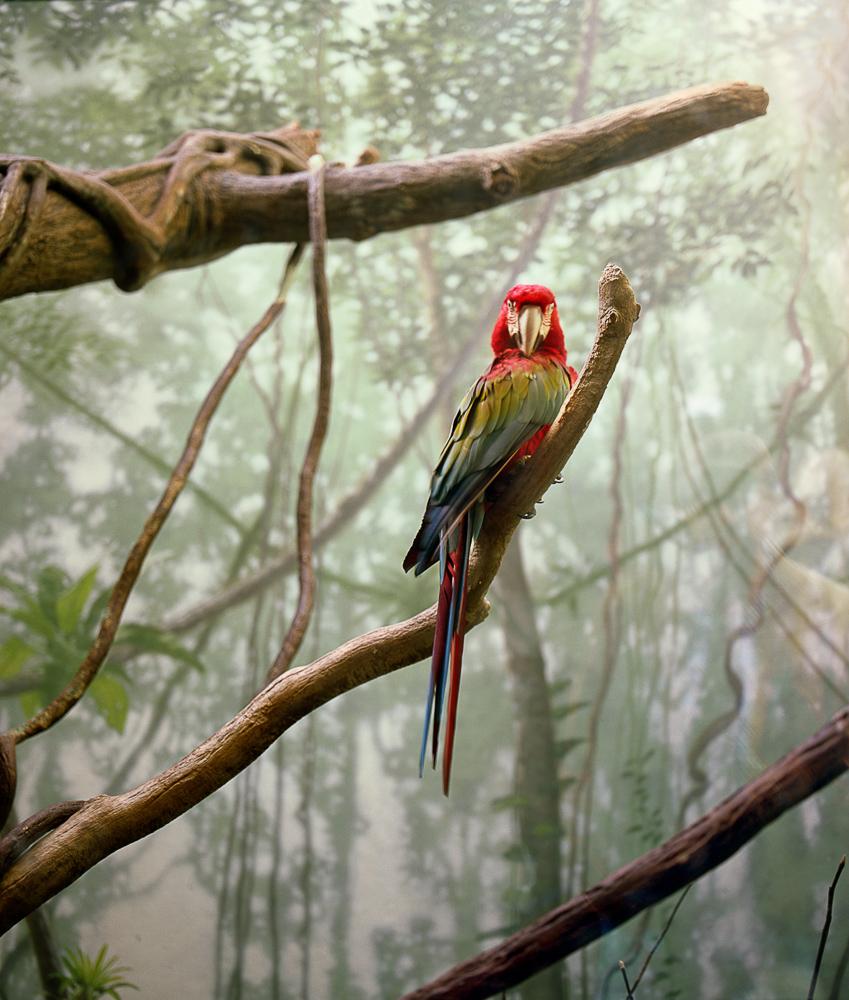 Vitrine (Macaw) #2, 2010
