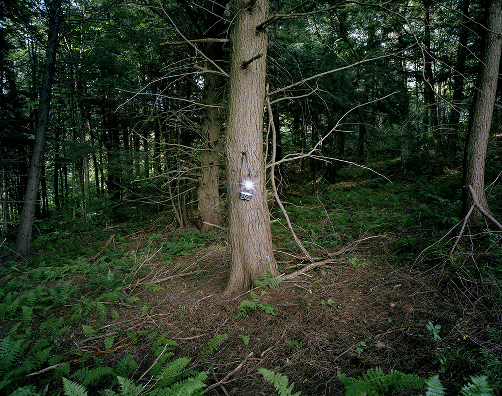 A Camera in the Forest