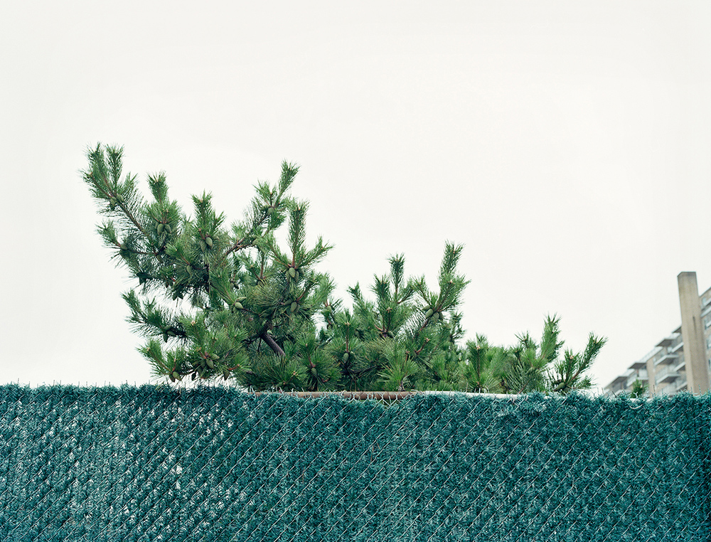 Green Fence, New York, 2013