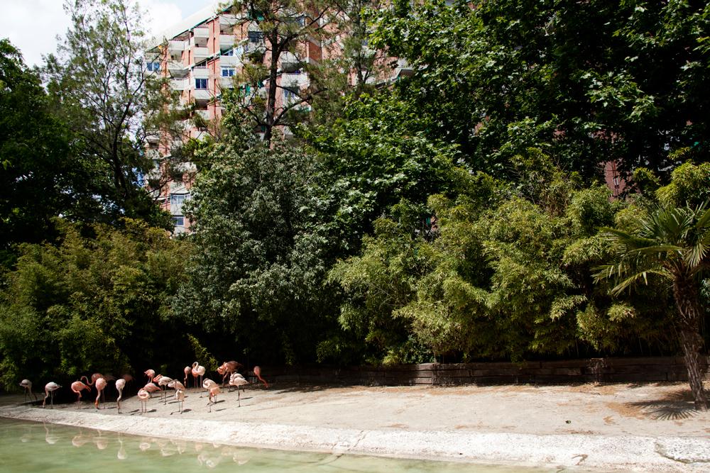 Common flamingos, Barcelona