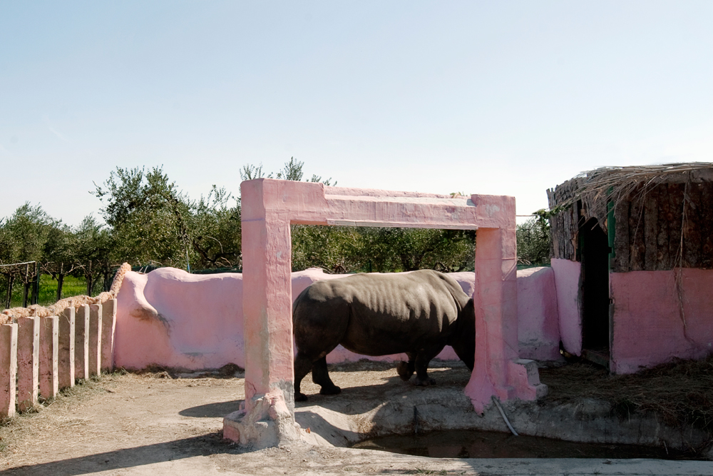 Rhinoceros, Chieti