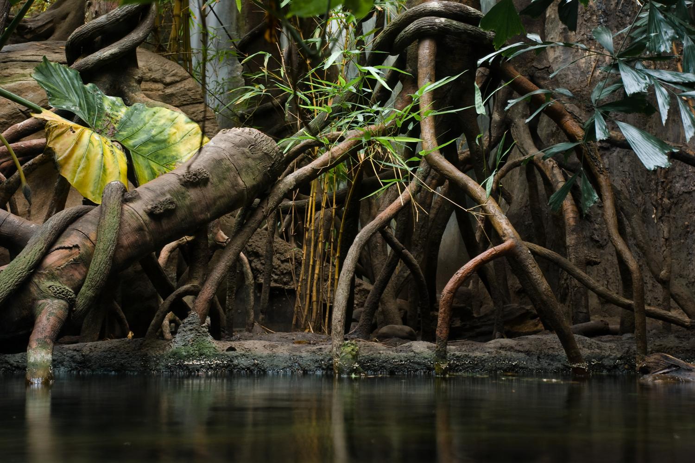 Pond, Lied Jungle