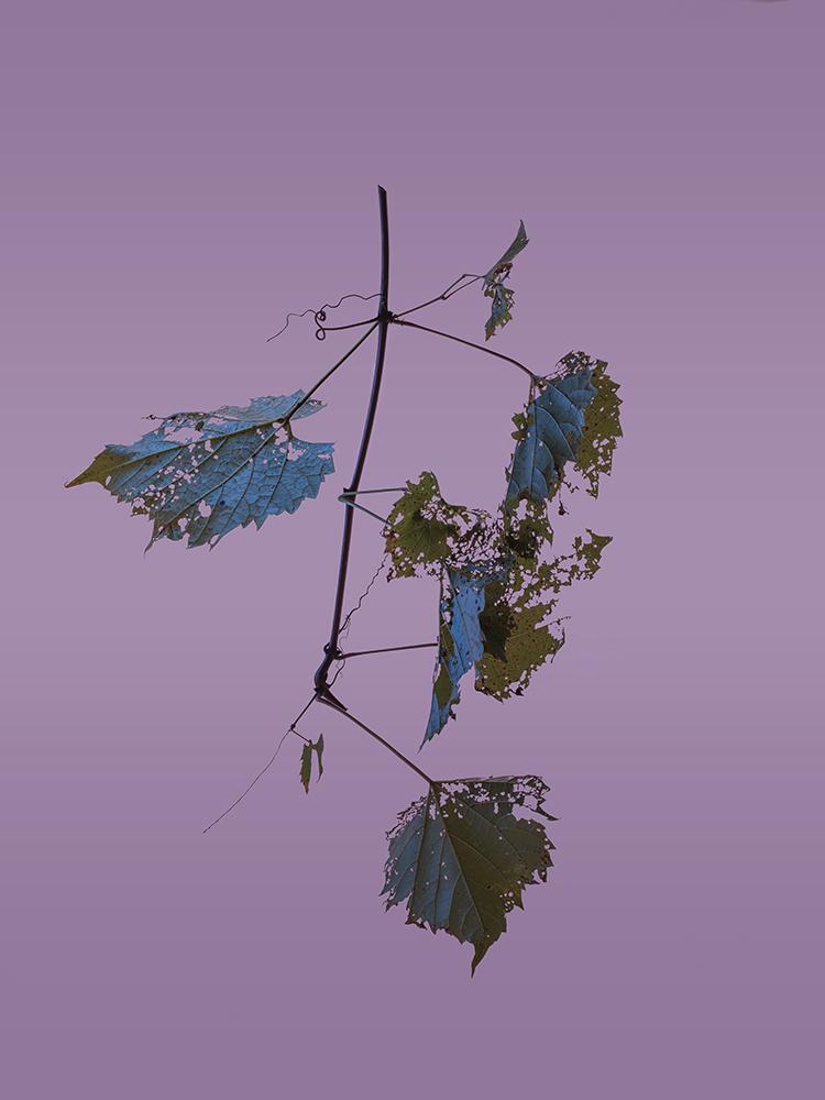 Twig #1