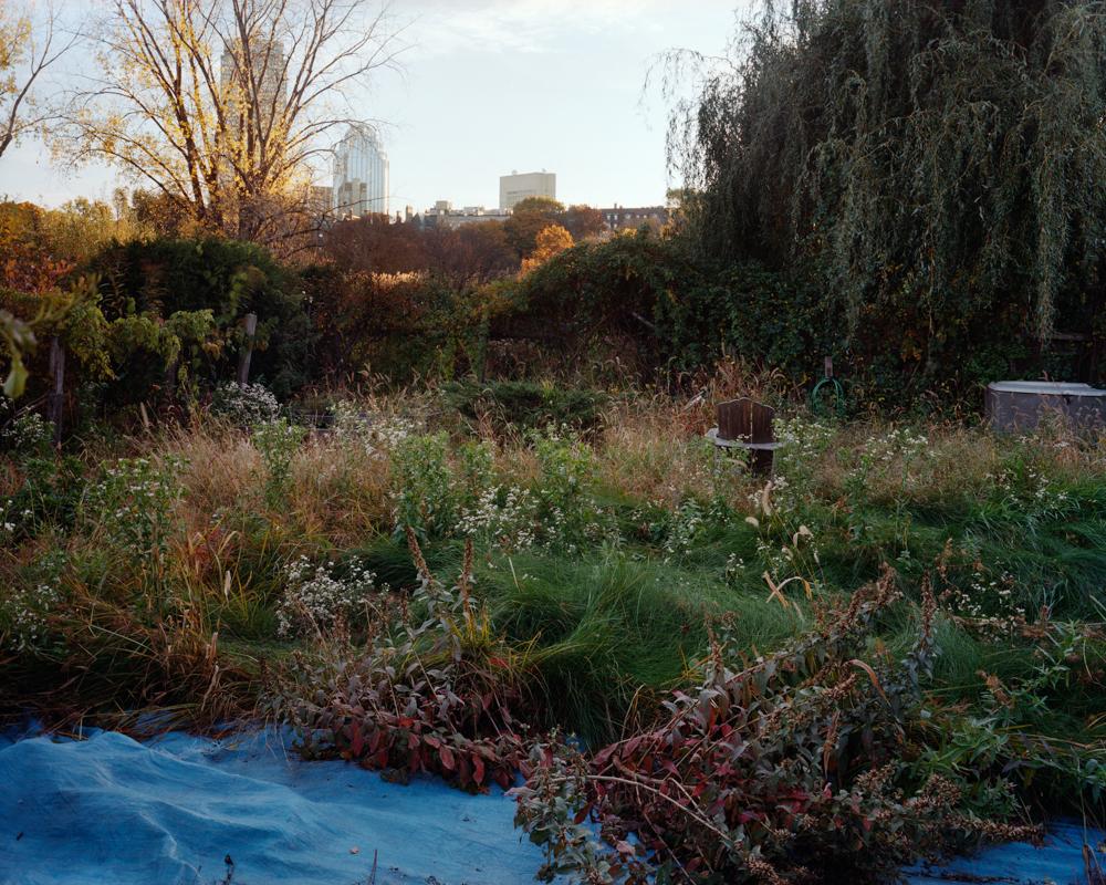 Overgrown Garden and Tarp, Fenway Victory Gardens