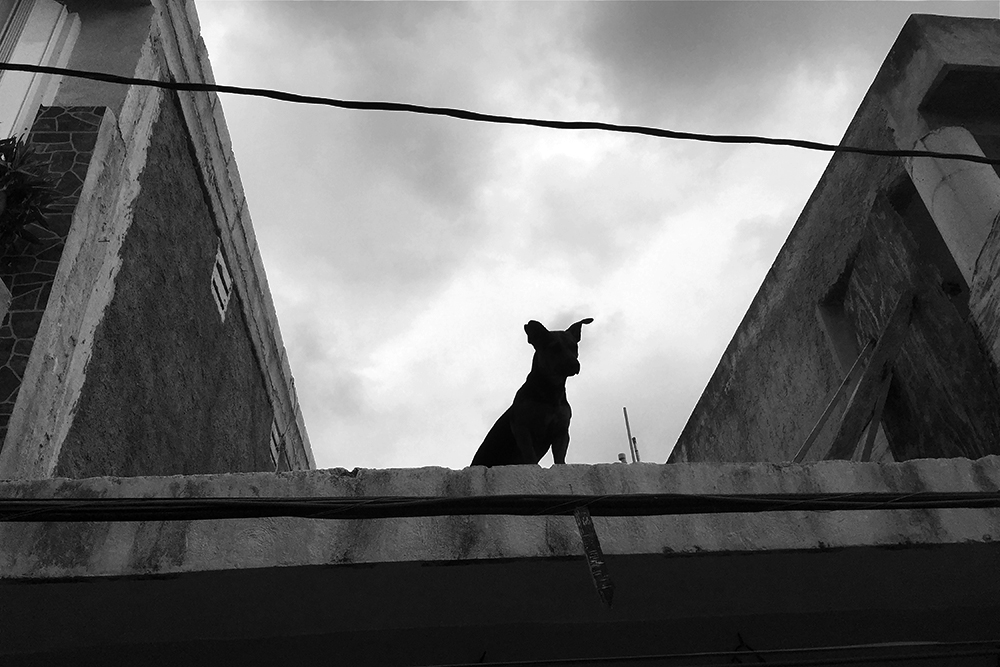 Dog on a Roof, Isla Mujeres, Mexico