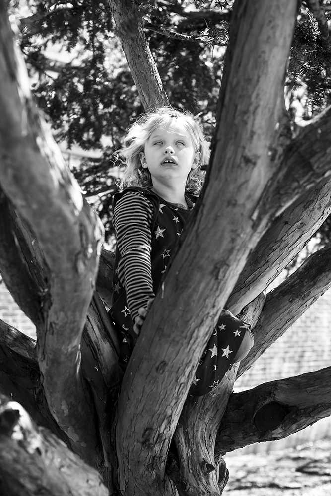 Young Boy in a Tree, Brooklyn, NY
