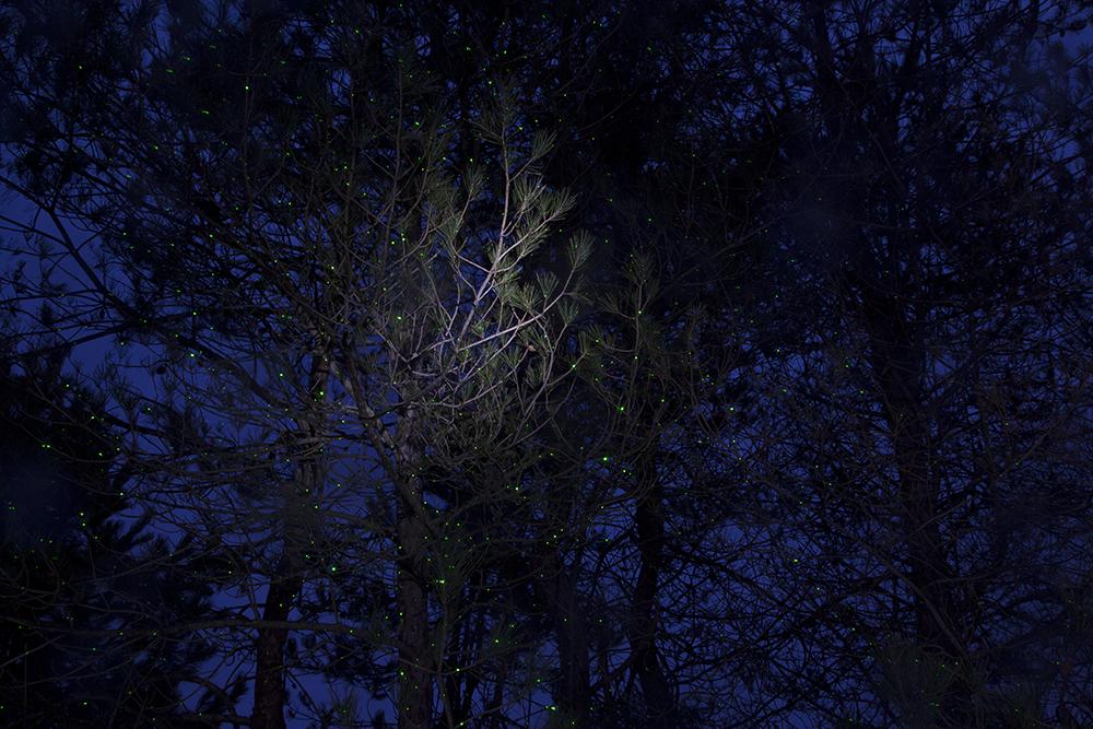 Tracing Spirits (PineTrees), 2017, © Barbara Diener