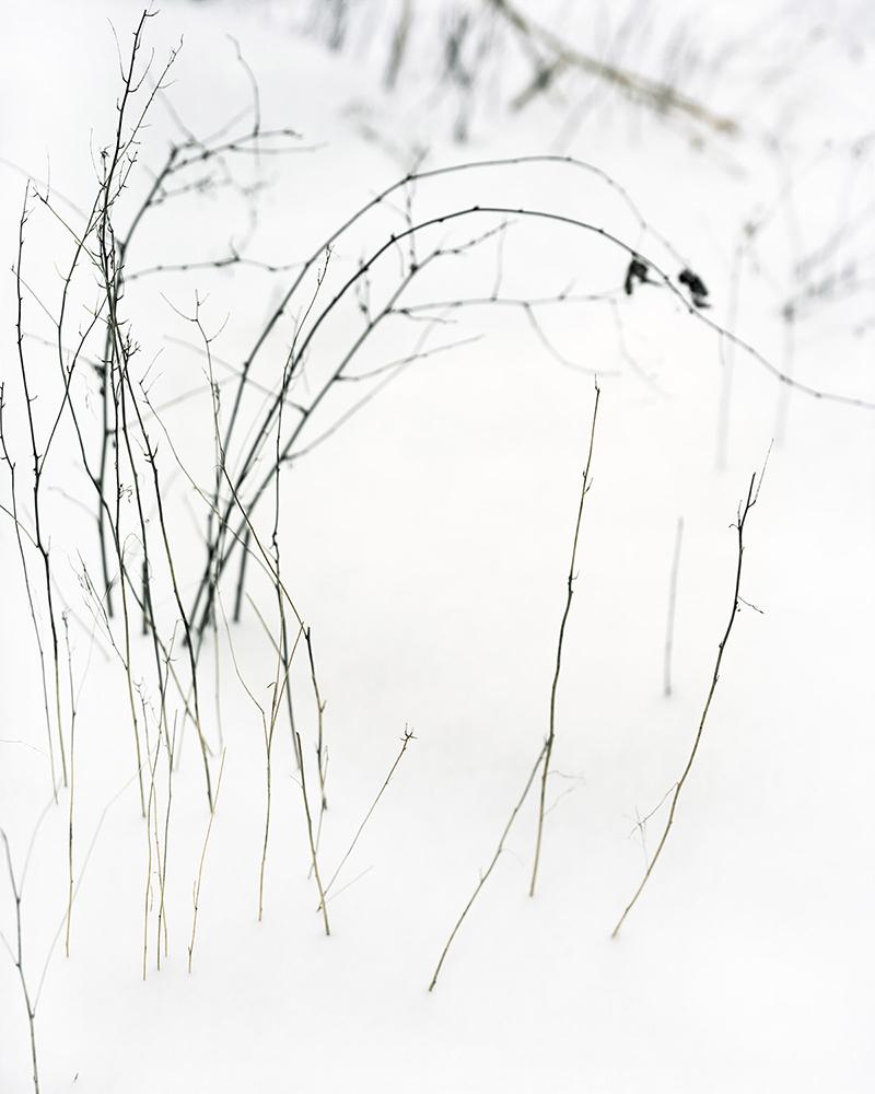 Snow Dance , 2016