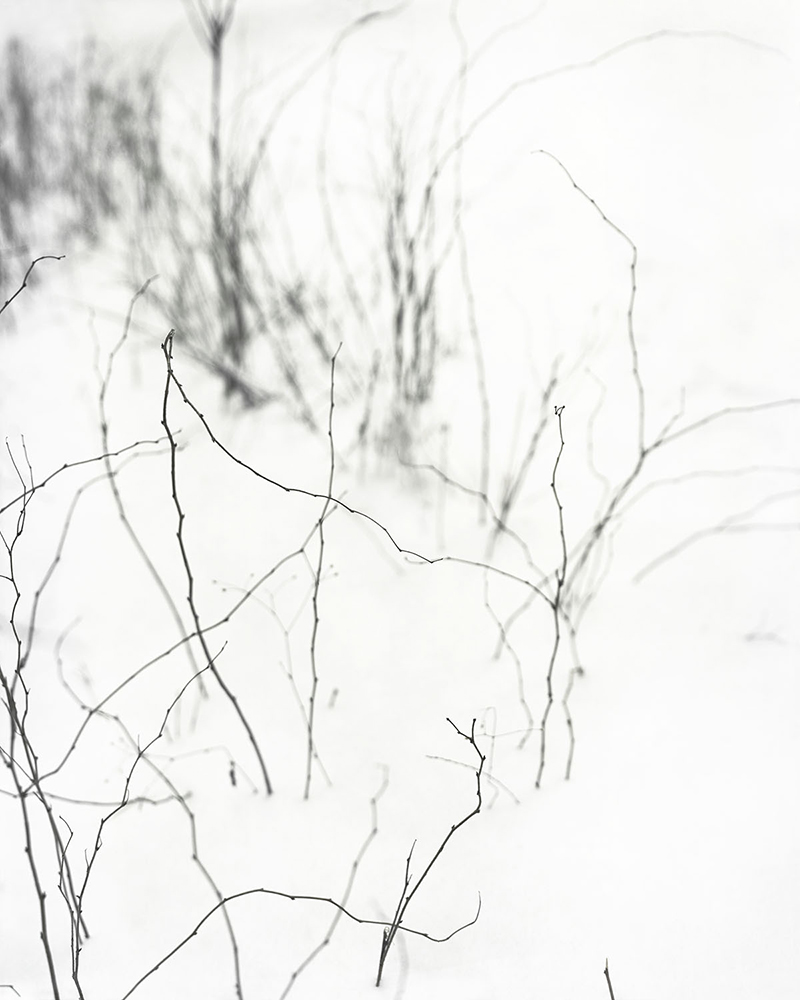 Snow Touch , 2016