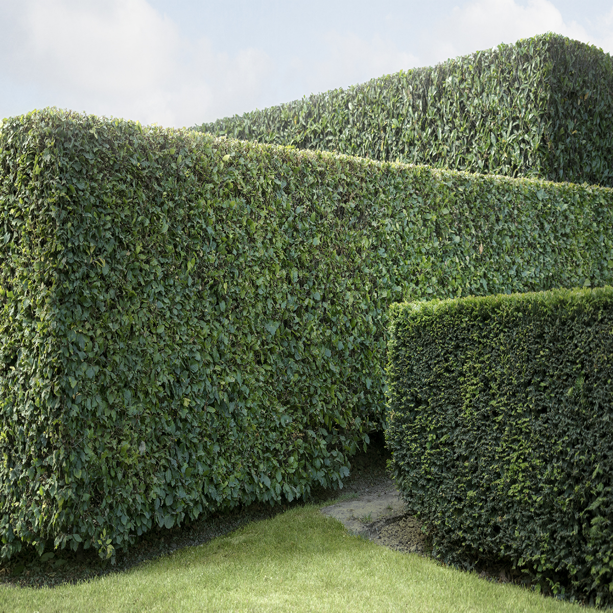 Hedge #10