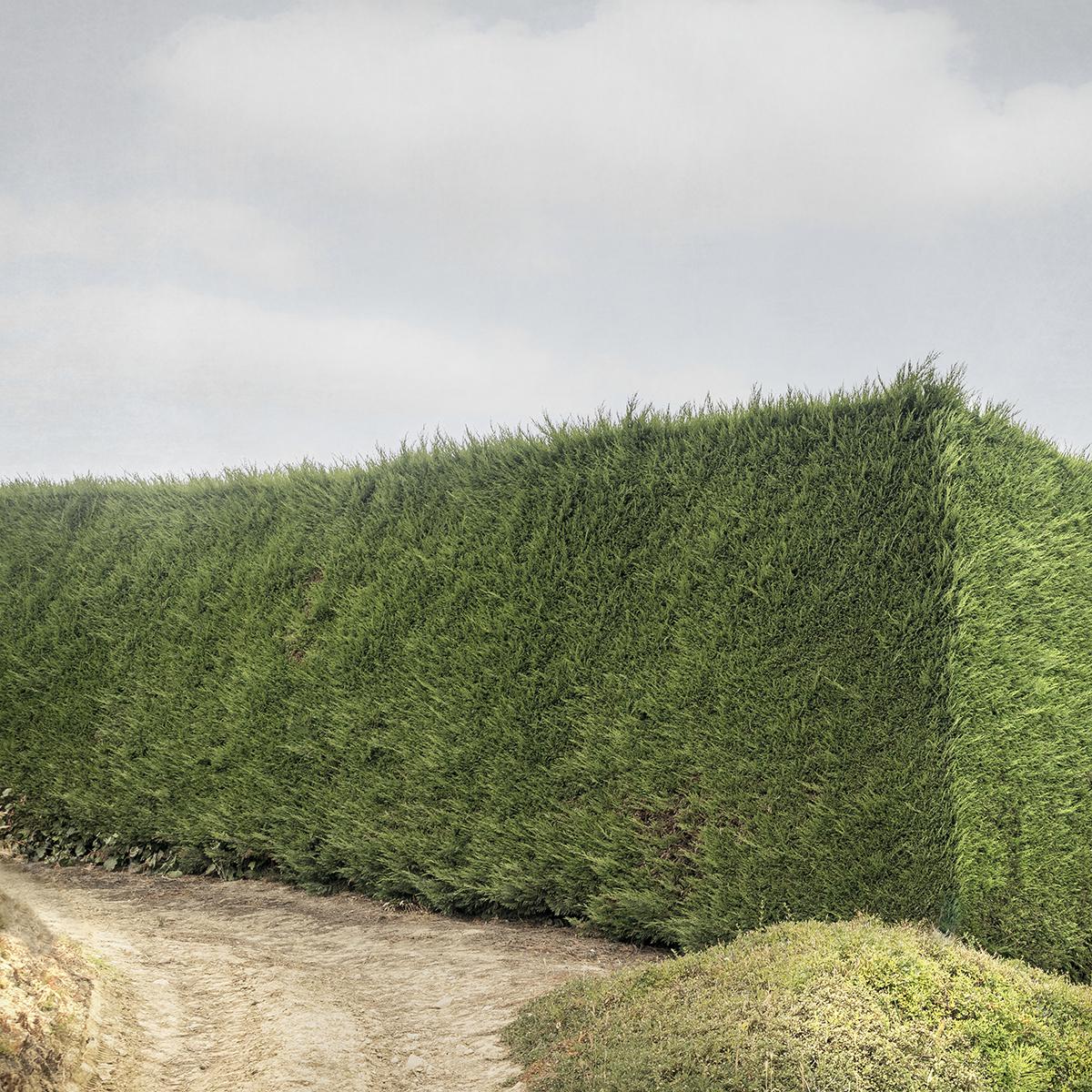 Hedge #3