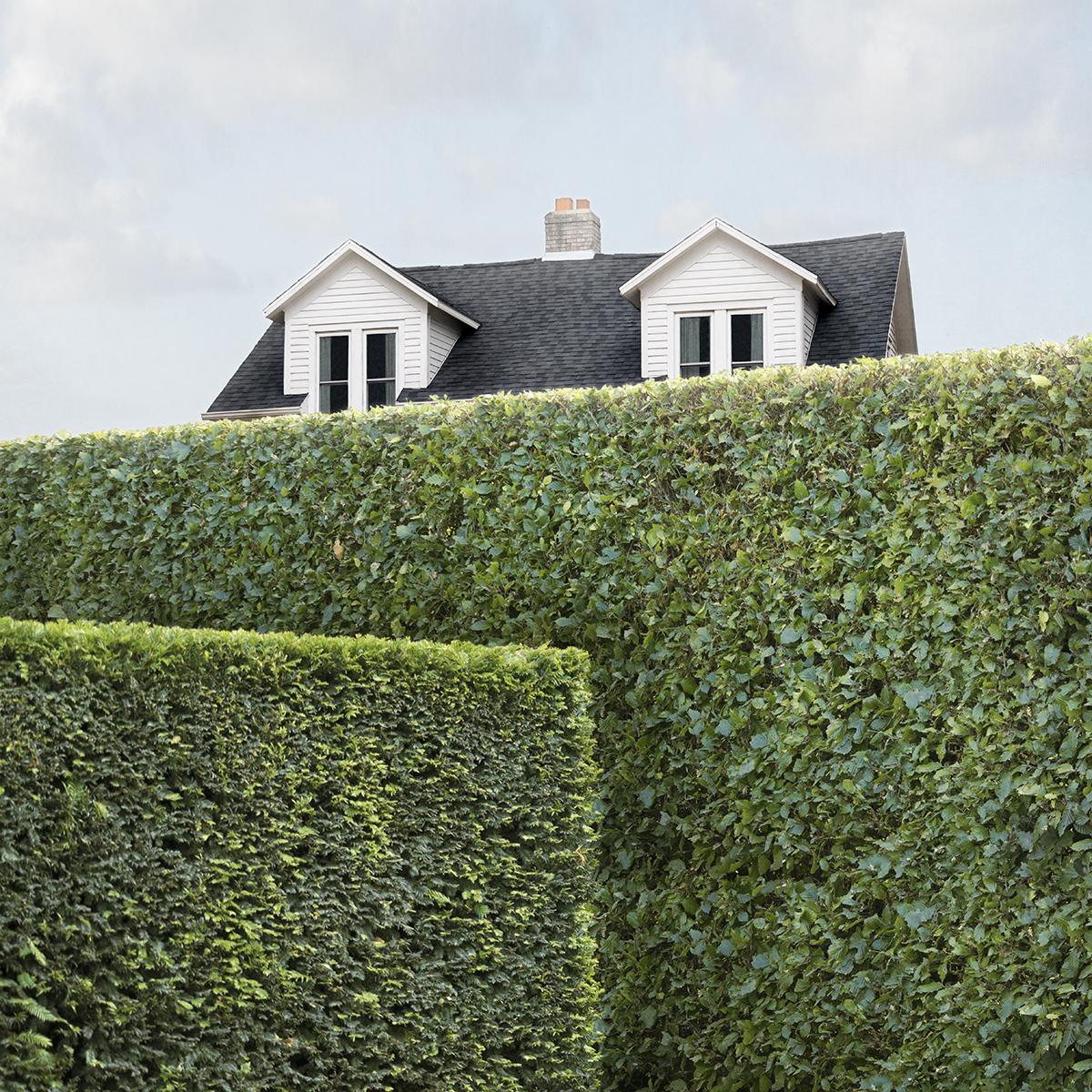 House & Hedge  by Carol Erb