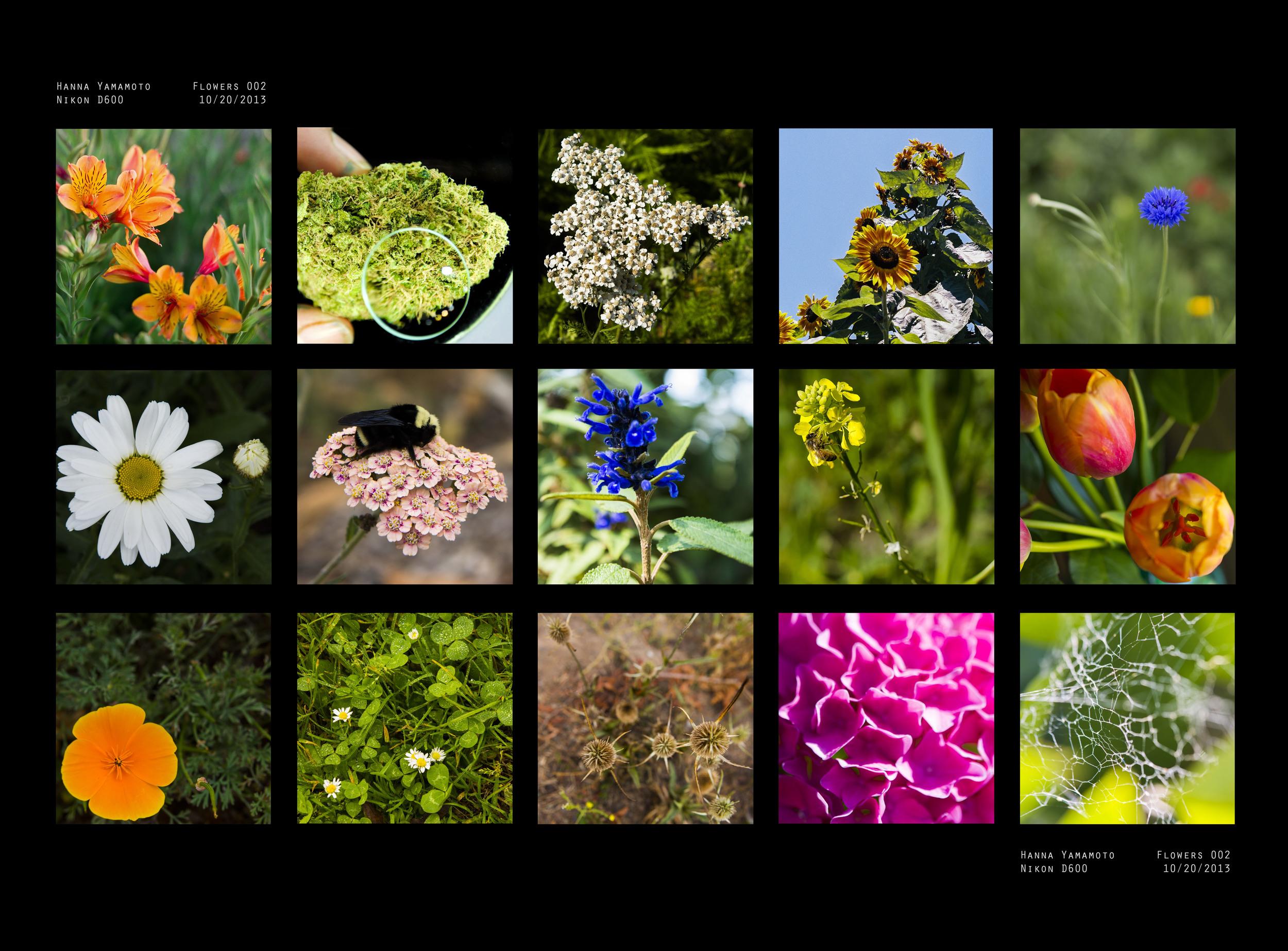 contactsheetflowers-color.jpg