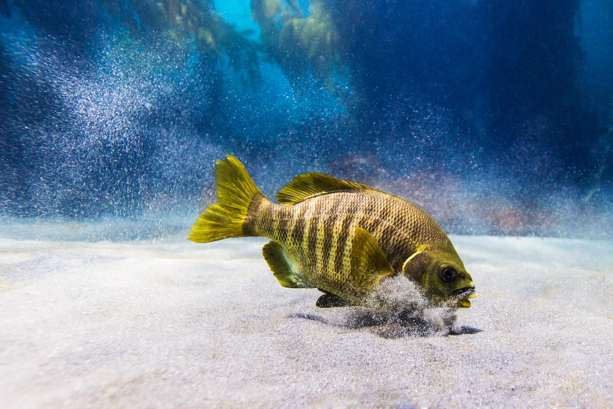 This fish
