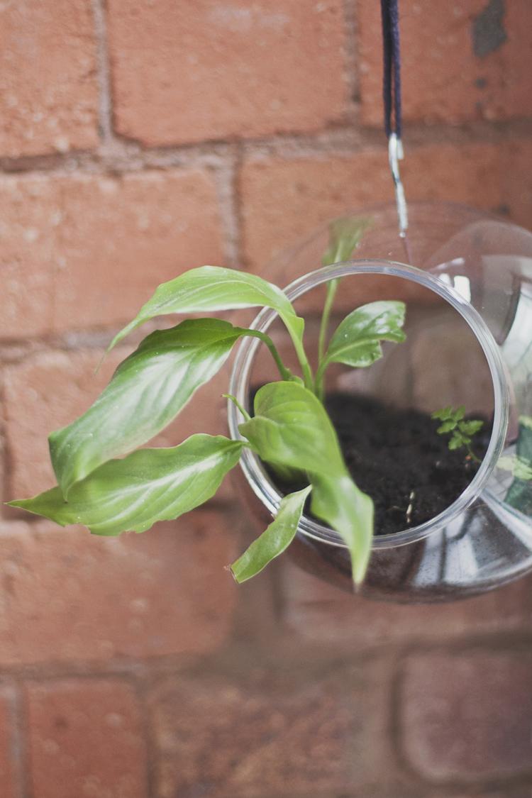 hanging terrarium diy.jpeg