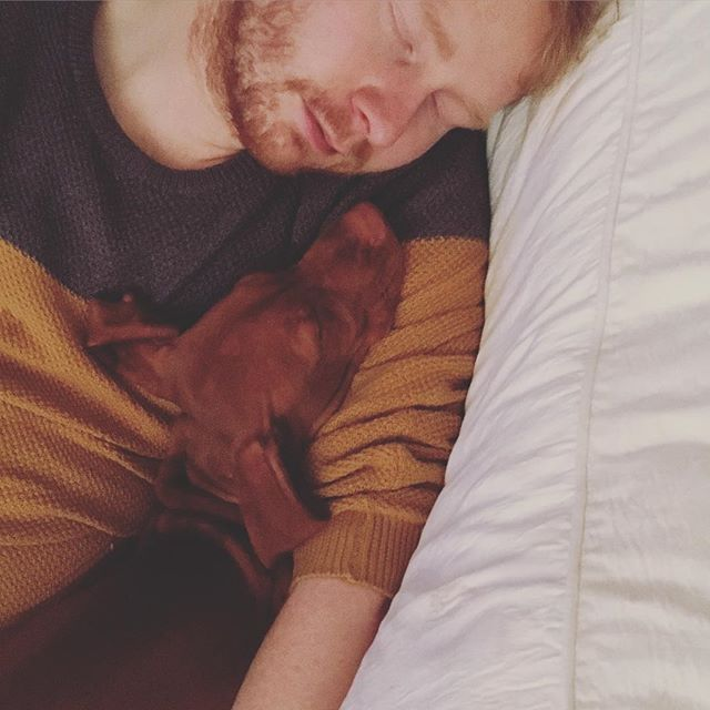 Those evenings when you think you're going to the pub, start getting ready, only to find the team has changed the vibe of the night and it's time for pyjamas and catchup episodes of Shetland on BBC iPlayer. Time to open a bottle of wine 🍷💤🐶 #aurathesnorer #vizslaaura #vizslagram #hungarianvizsla #vizsla #puppy #sleepyvizslasarethebest