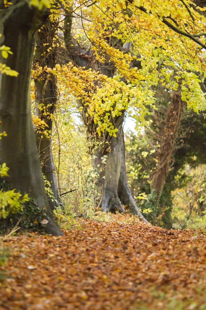 Oxfordshire ridgeway blogger walk 4