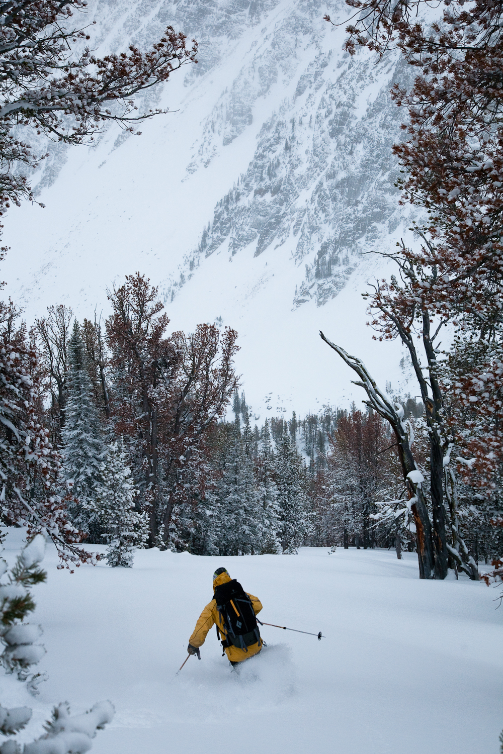 Whitebark pine glades are the best in the world.