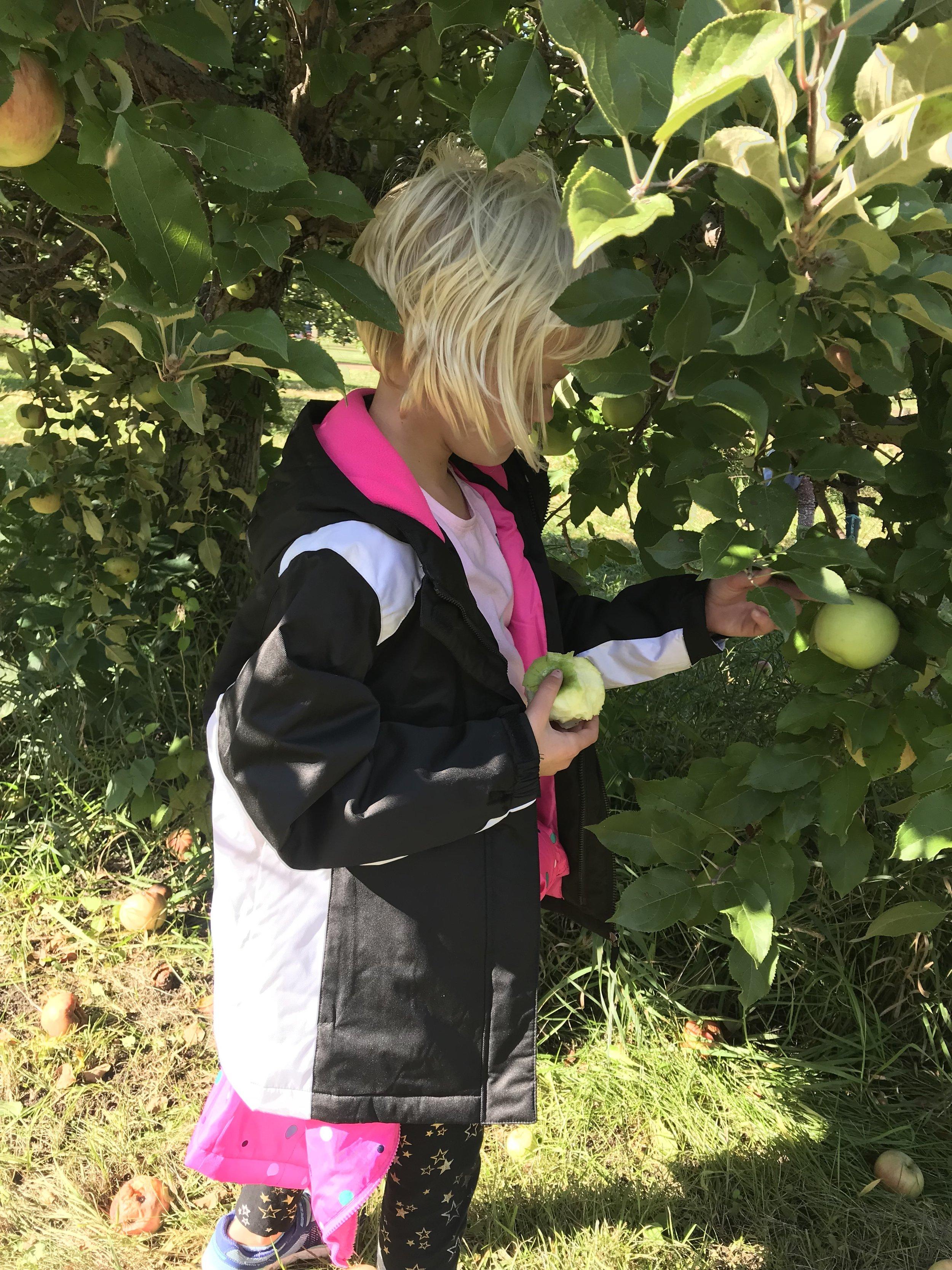 tweens apple orchard 3.jpg