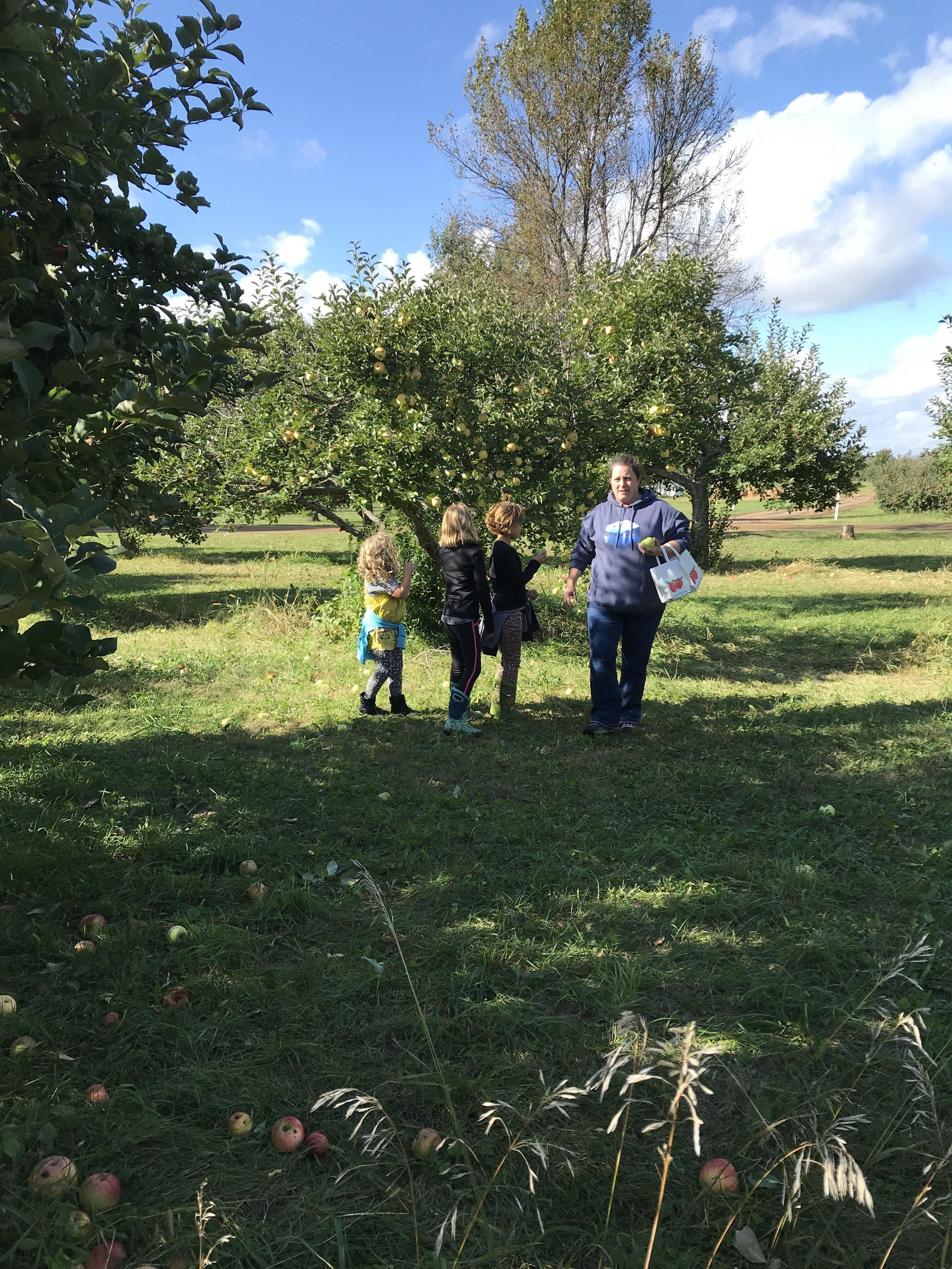 Tweens apple orchard 2.JPG