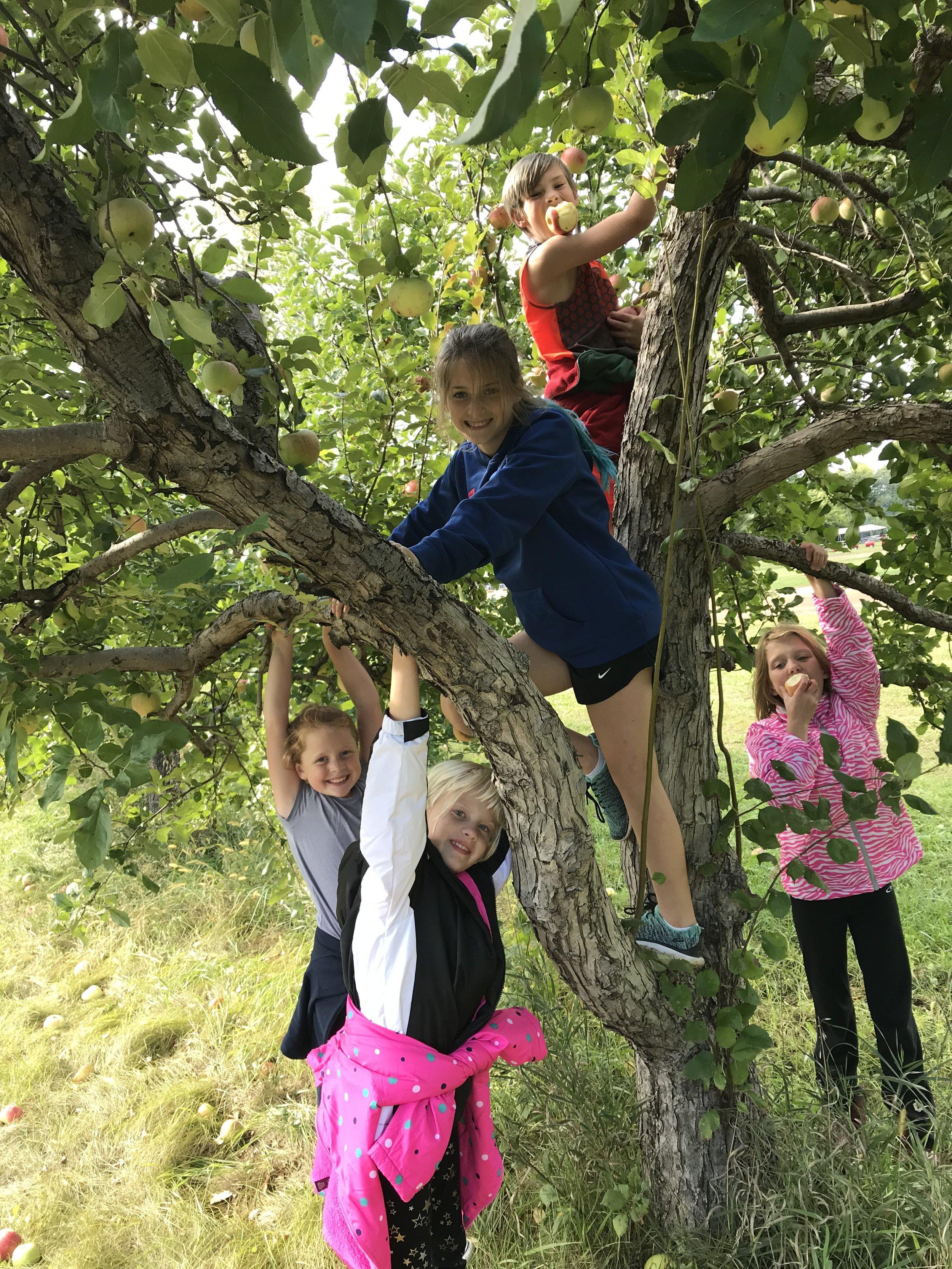 Tweens apple orchard.jpg