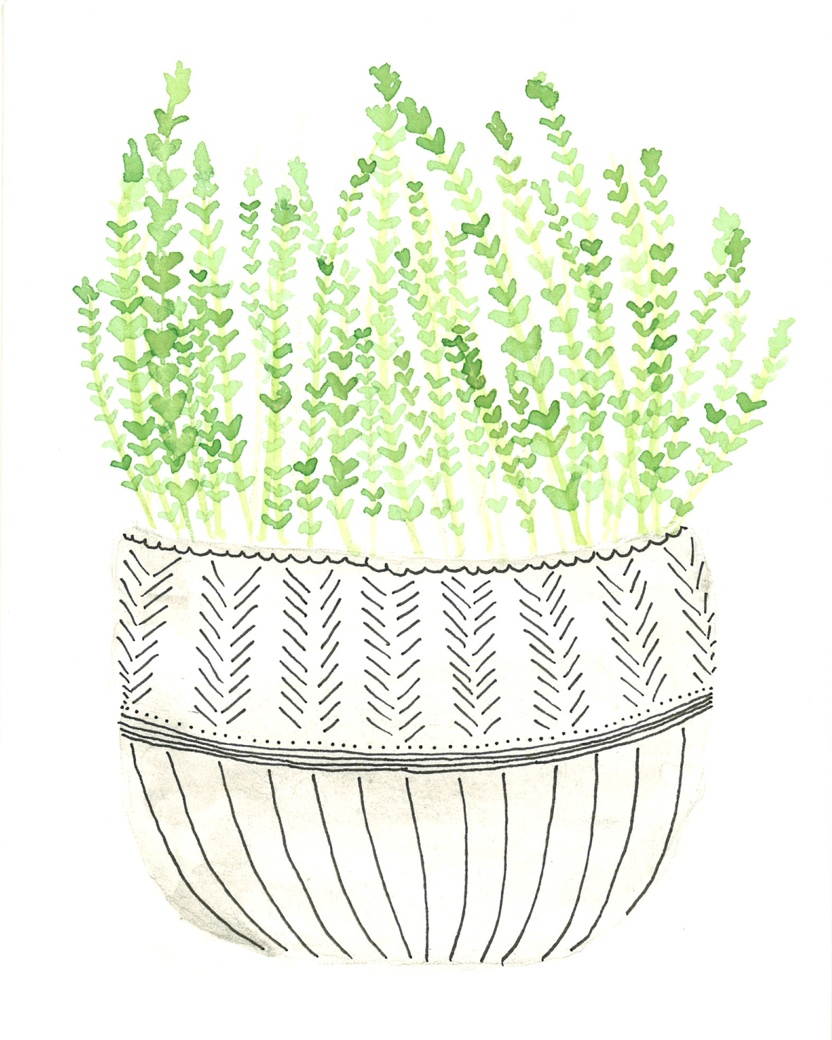 Potted thyme plant - watercolor and ink on paper