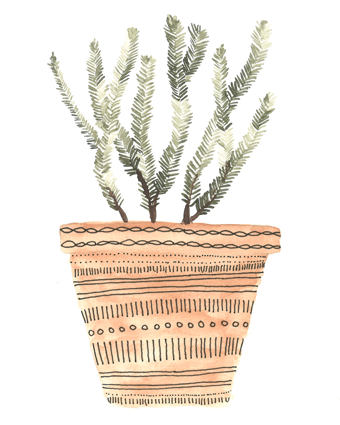 Potted rosemary plant - watercolor and ink on paper