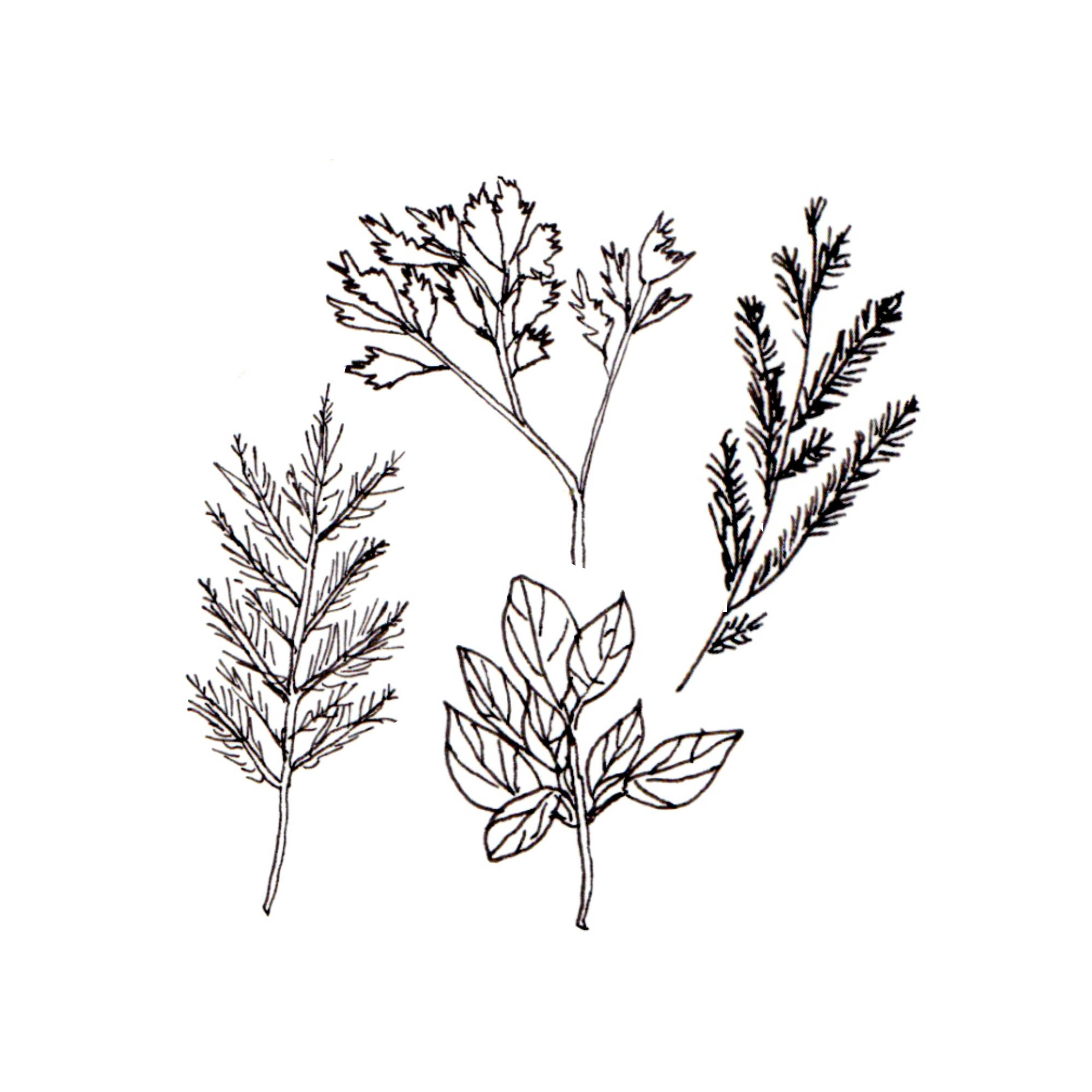 herb collection.jpg