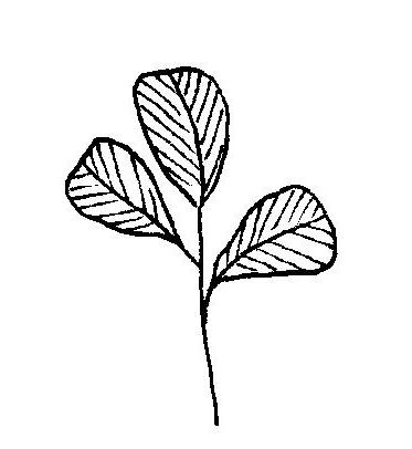 new logo 2.jpg