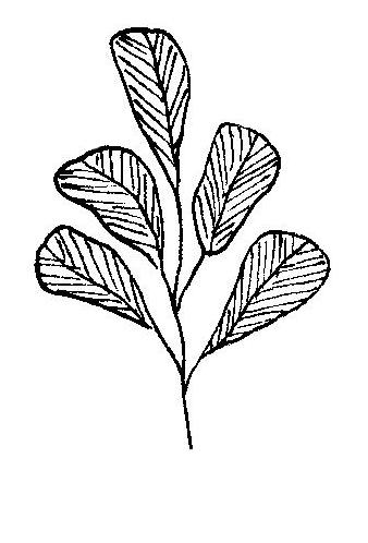 new art logo illustrations-page-001.jpg