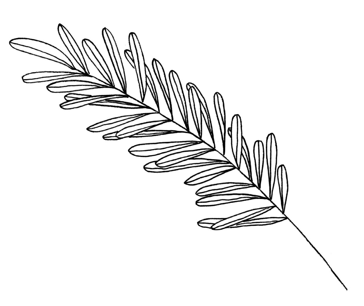 new logo plant.png