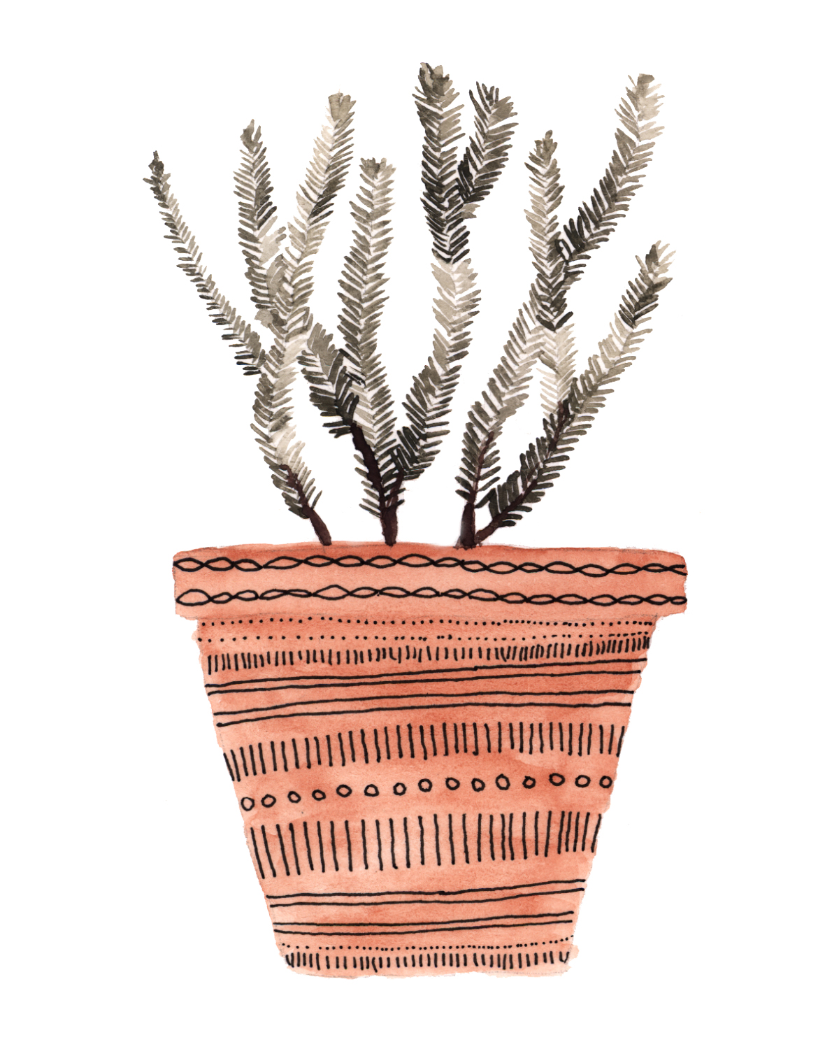 potted rosemary.jpg