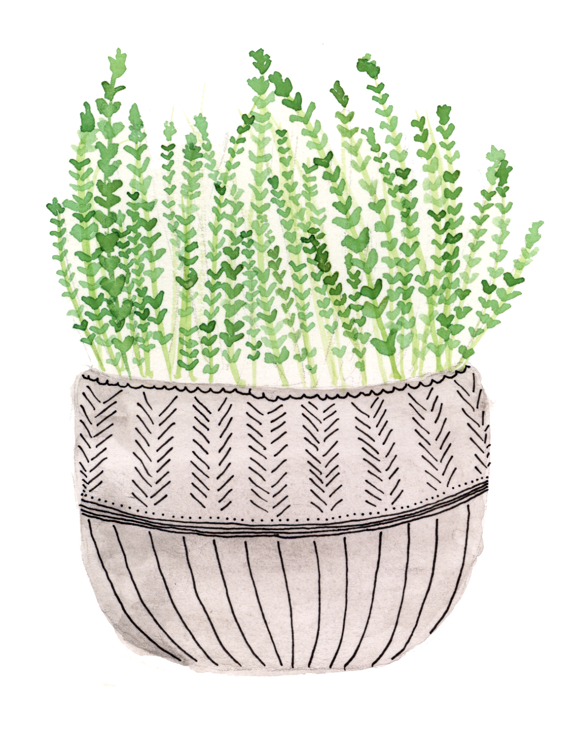 potted thyme.jpg