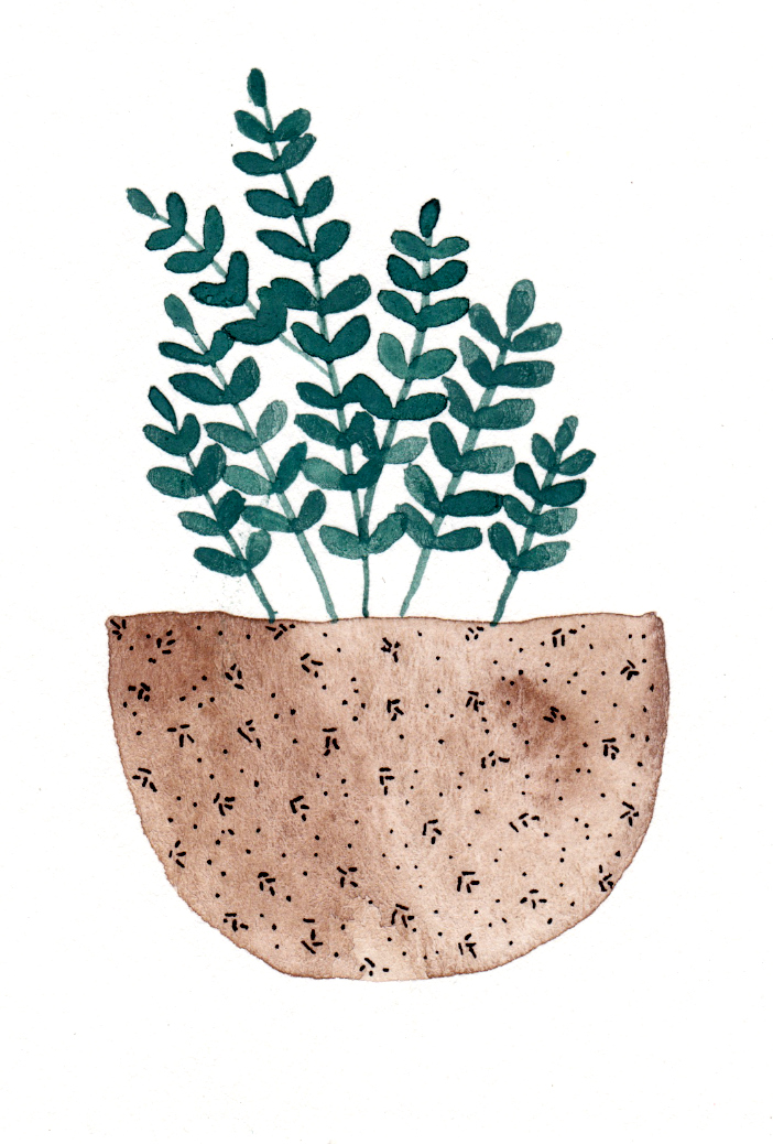 potted succulent 3.jpg