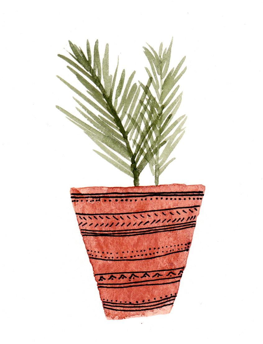 potted fern 3.jpg