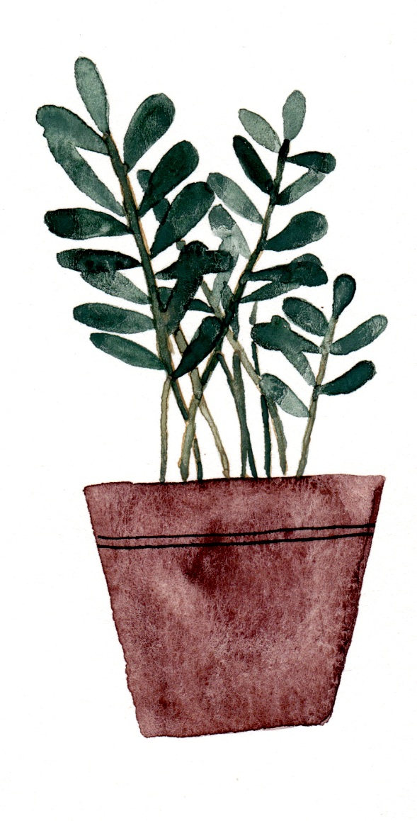 potted succulent 2.jpg