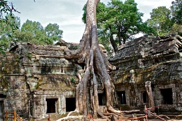 angkor-wat-and-tree.jpg