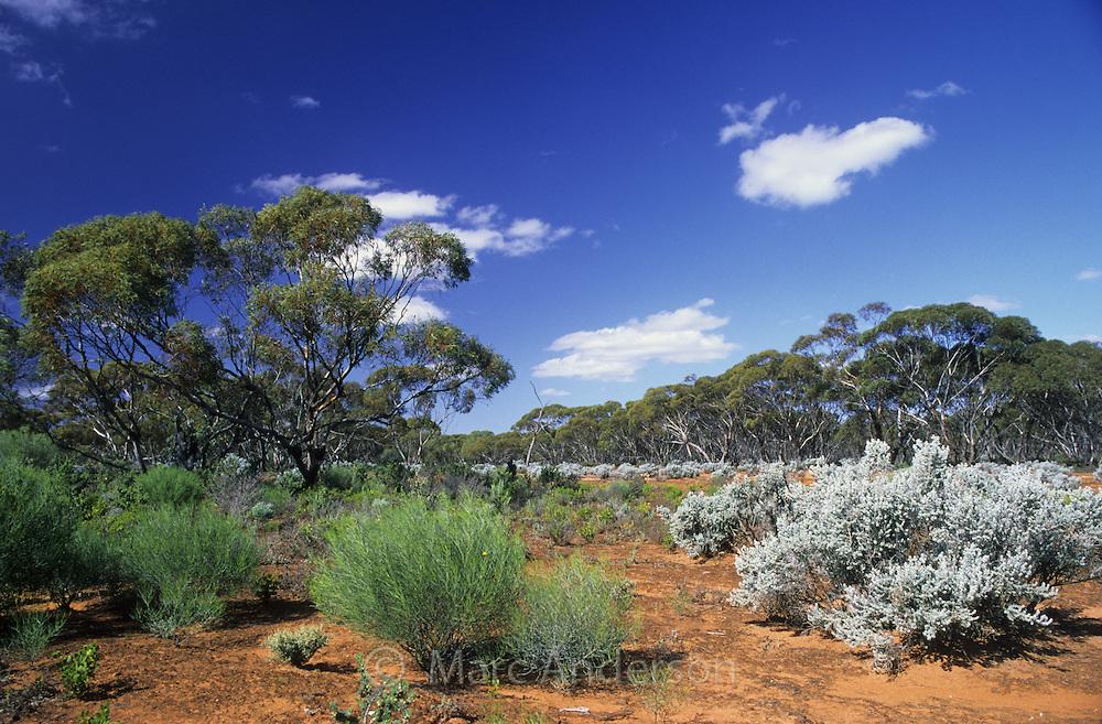 australia-desert-sau00010.jpg