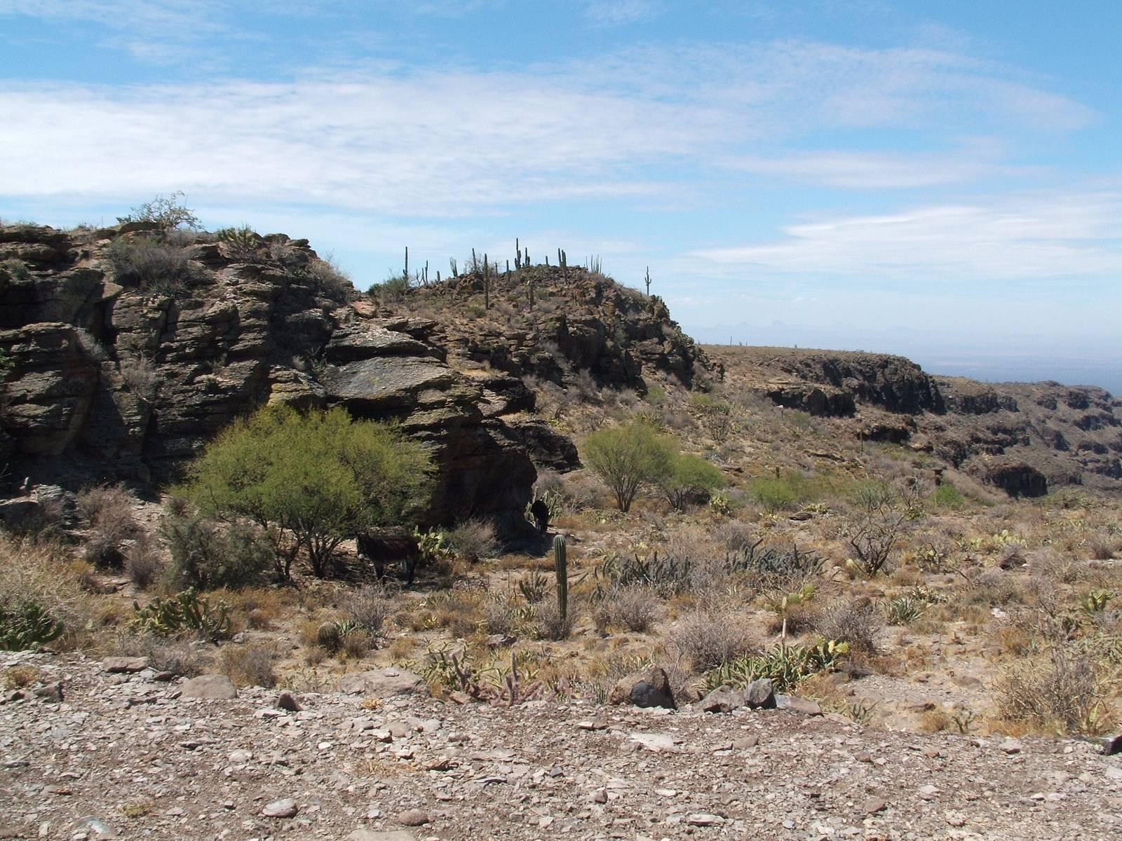 Mexico-rocks-vegetation-desert.jpg